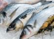 Balık ve Gebelik
